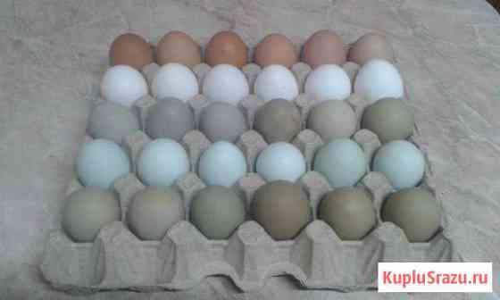 Яйцо куриное Ижевск