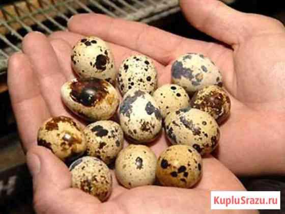 Продаю яйца Михнево