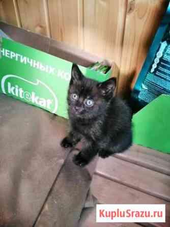 Котята в дар Железнодорожный