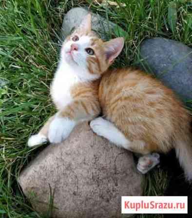 Котёнок Видное
