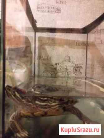 Черепаха Красноухая Москва