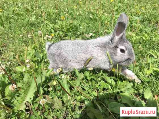 Кролик Екатеринбург