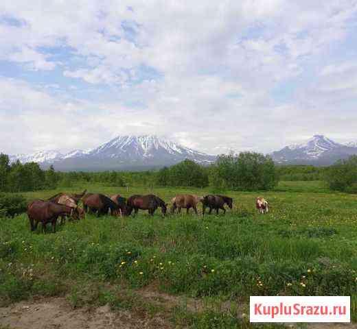 Туристический конный бизнес. Ферма Елизово