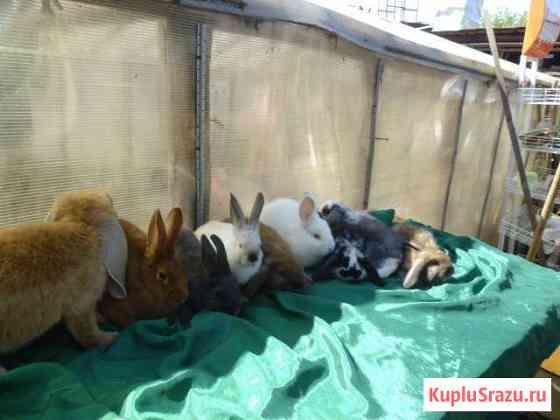 Кролики мясных пород Иваново