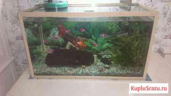 Аквариум с рыбками и фильтром Артем
