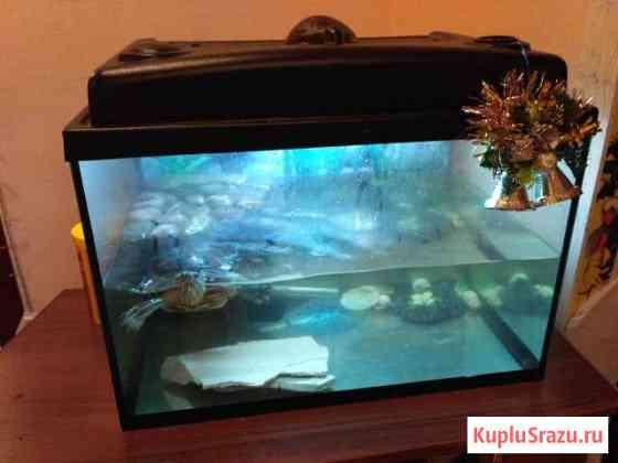 Террариум - аквариум 90 л с черепахой Киров