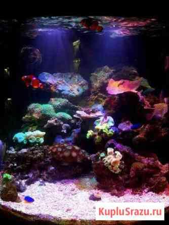 Морской аквариум Кострома