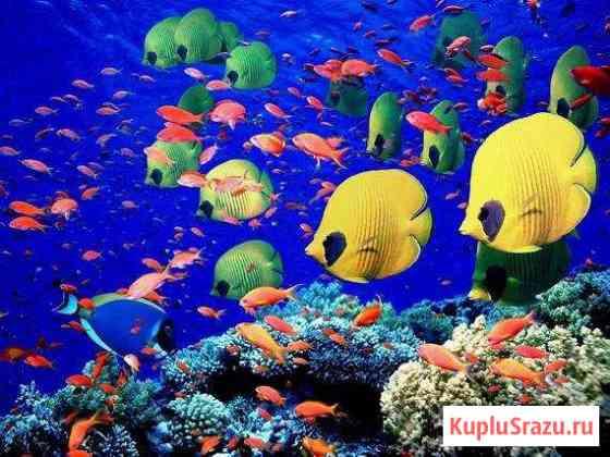 Лампы для окраса рыб Севастополь