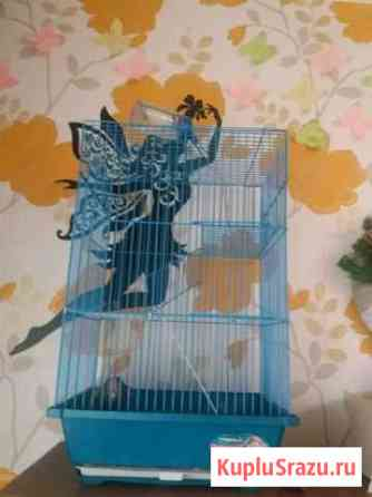 Крыска с клеткой Нижневартовск