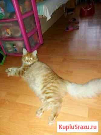 Красивый котик Абакан