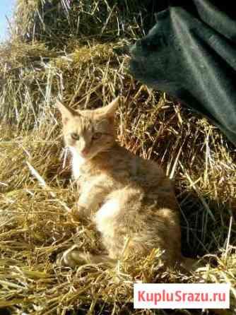 Отдам котят в хорошие руки Красногорский