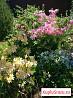 Цветы, рассада, саденцы