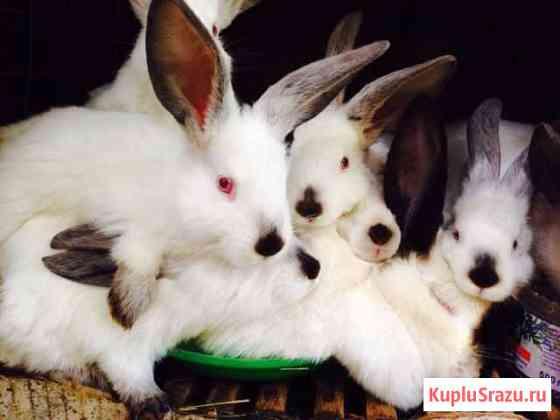 Кролики Дубовая Роща