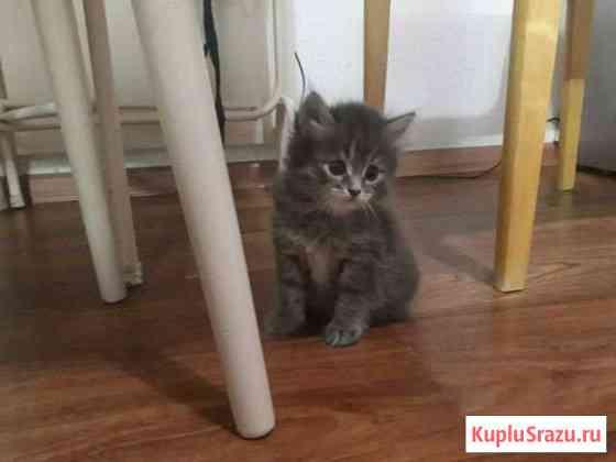 Котёнок Алатырь