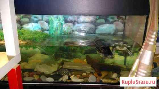 Аквариум и 2 черепахи Иваново
