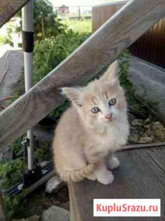 Котята в добрые руки Чаплыгин