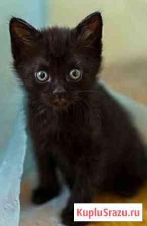Котята Алатырь