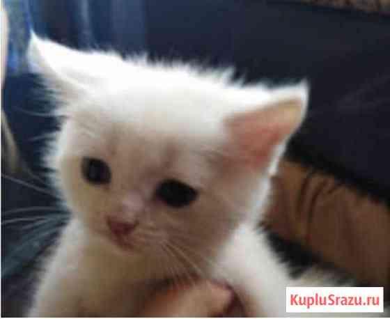 Котёнок Черногорск
