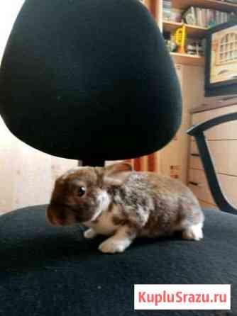 Кролик декоративный Краснодар