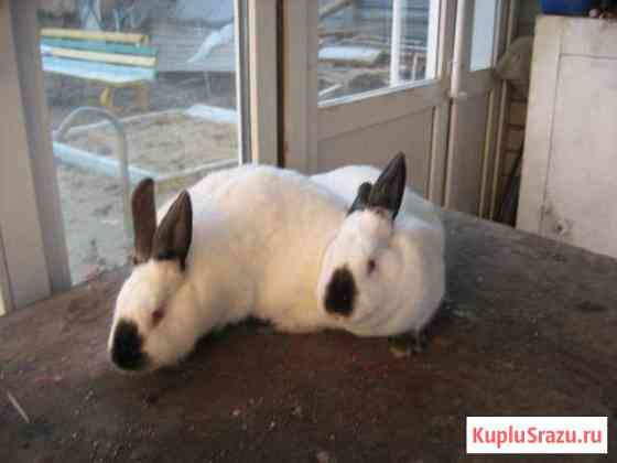 Кролики Волгоград