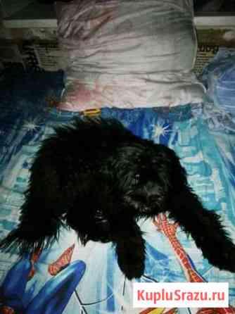 Отдам собаку Бокситогорск