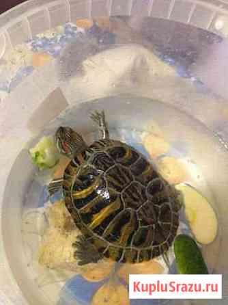 Воденая черепаха Озёры