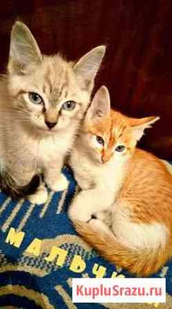 Котятам нужен дом и добрый хозяин Улан-Удэ