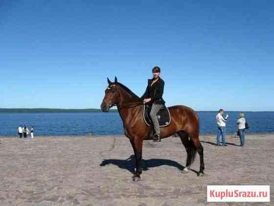 Лошади и пони Санкт-Петербург