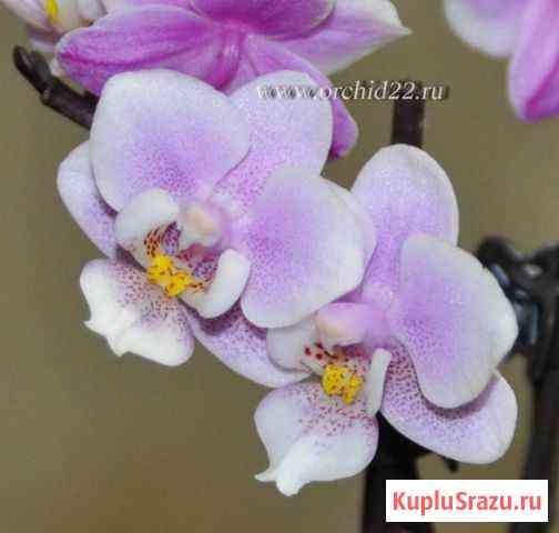 Орхидеи Шарыпово