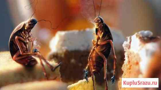 Мраморный таракан Ульяновск