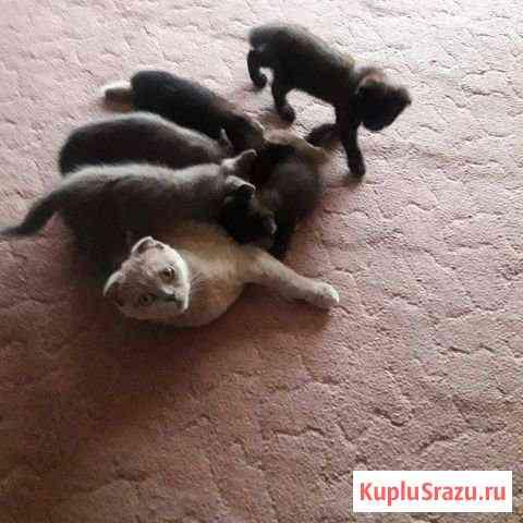 Отдам кошку вместе с котятами Орджоникидзевская