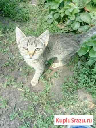 Котёнок Рузаевка