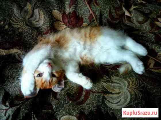 Отдам котенка Саранск