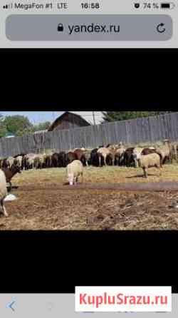 Овцематки Троицкое
