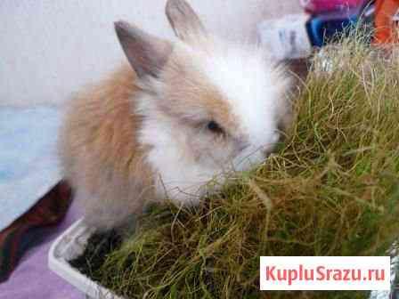 Кролик декоративный Нижний Новгород