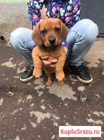 Отдам собаку в хорошие руки Комсомольск-на-Амуре