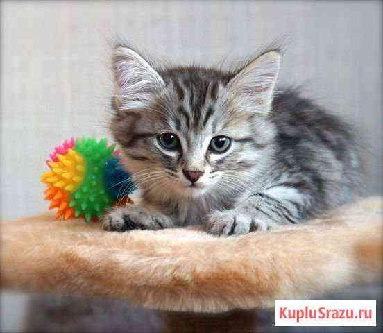 Котенок ищет дом Нижневартовск