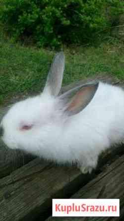 Калифорнийские кролики Екатеринбург
