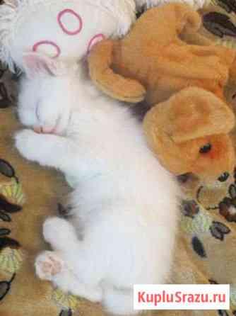 Отдам котёнка Ветлужский