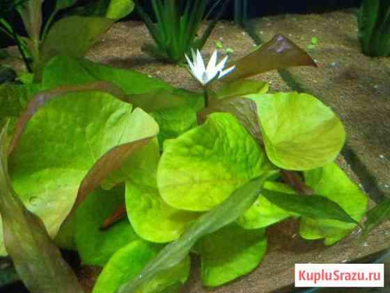 Аквариумные растения Иваново