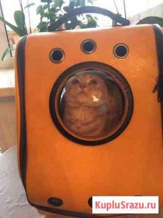 Переноска (рюкзак) для кошки Чебоксары