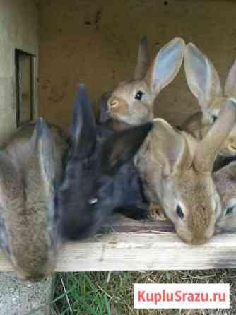 Продам кроликов Хабаровск