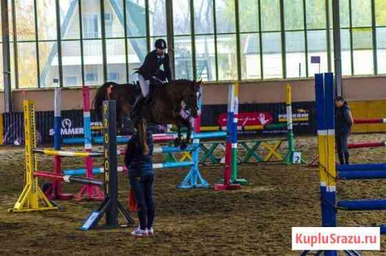 Спортивные лошади в аренду. Конный спорт Ростов-на-Дону