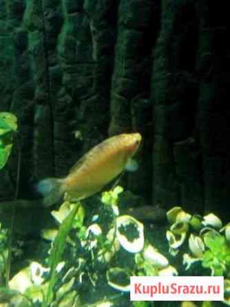 Рыба Йошкар-Ола