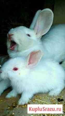 Кролики Хабаровск