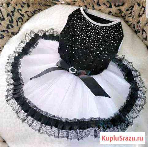 Платье на мини-собачку. XS Хабаровск