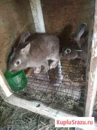 Кролики Грозный