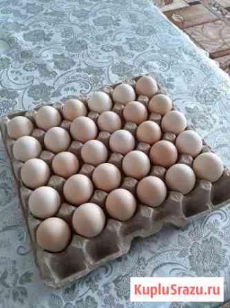 Яйца для инкубации Нижневартовск