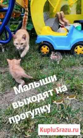 Котята в добрые руки Дмитров