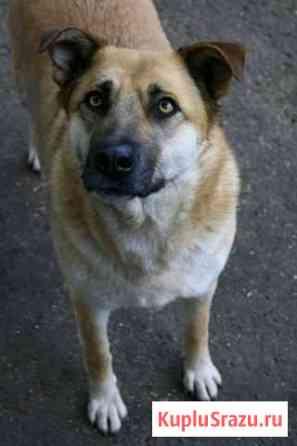Ищу дом собаке Ульяновск